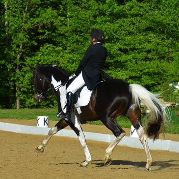 Gotham performing dressage, extended trot