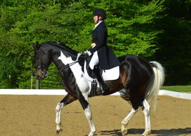 Gotham and rider performing dressage movements