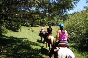 people on horse-back trail riding