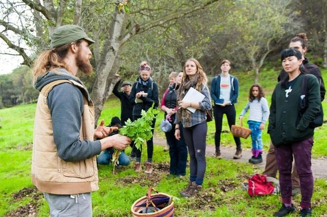 Bryan of Healing Ecosystems leading an urban foraging tour (prior to COVID-19 outbreak).