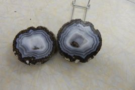 Also known As Coconut Geodes because of the eyes found on the outside