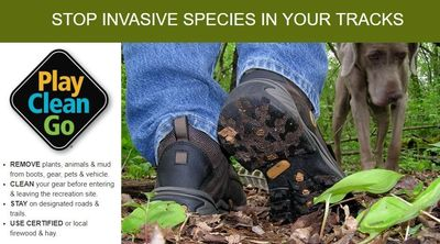 Invasives and outdoor recreation