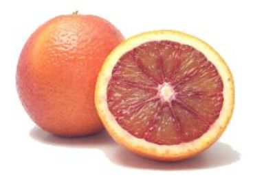 novagrim_france south african navel oranges