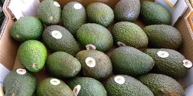 World avocado statistics
