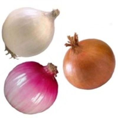 turkish onions - allium cepa