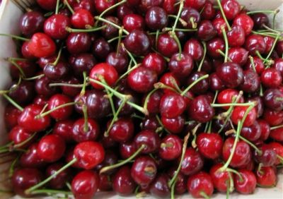 Novagrim_France sweet cherry importer