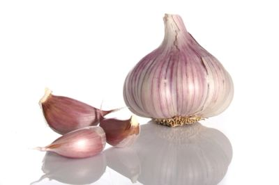 Purple garlic France