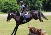 American Eventing Championships-Twice Removed