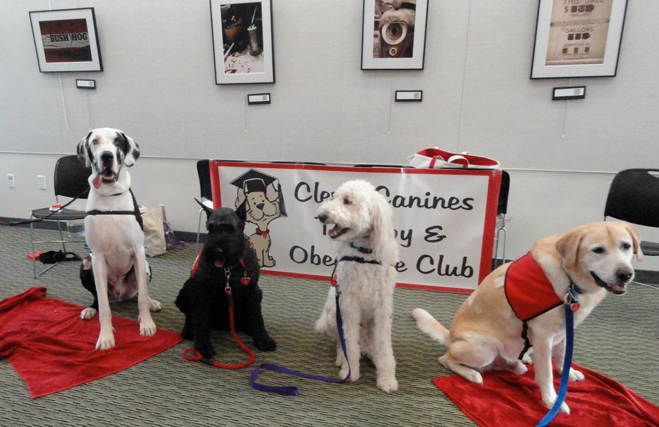 Four therapy dogs posing in front of club sign.