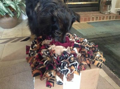 collie mix dog with snuffle mat