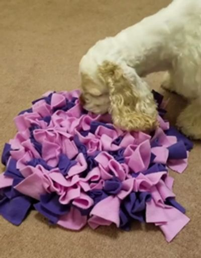 Springer Spaniel with snuffle mat