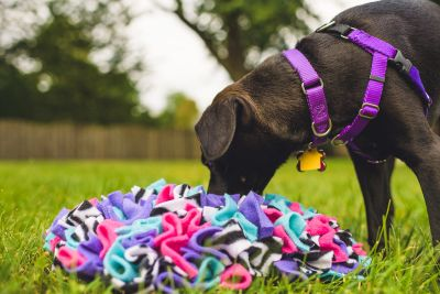 Puppy with snuffle mat