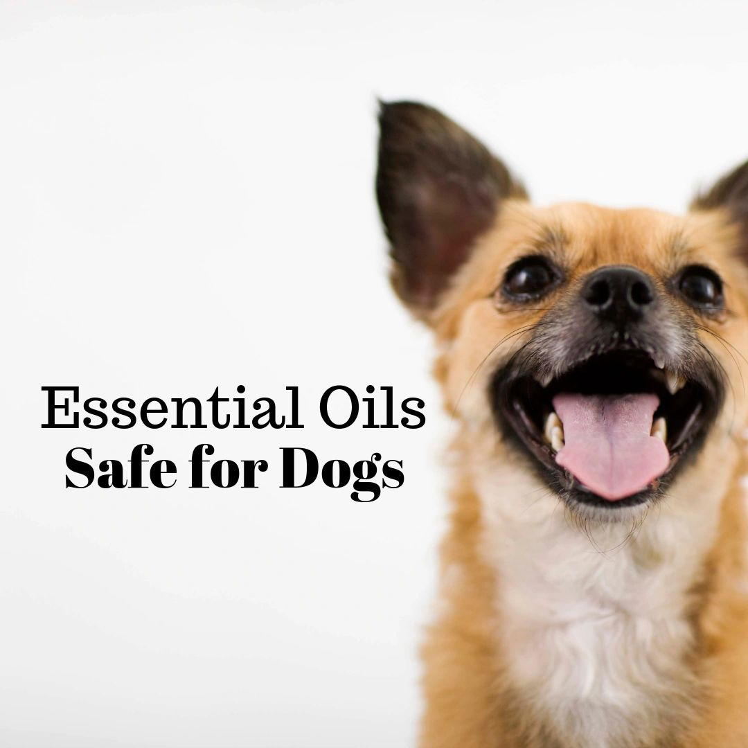 Doggy Do's and Don't to essential oils