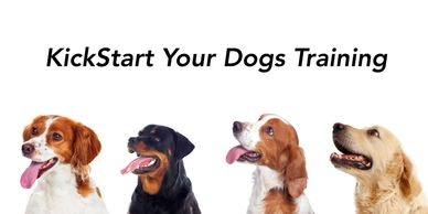 Any type of dog or Breed for Boot Camp Training