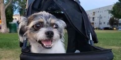 Skippy, the three legged dog, rolling like a boss in his stroller is so glad for the donations that make this possible