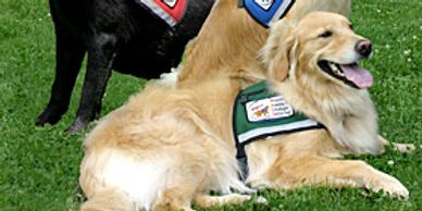 Service Dog Training PTSD Veterans ADA