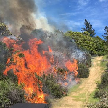 WILDFIRE IN CHAMISE AND MANZANITA BRUSH BLOCKING DRIVEWAY EXIT.  Brush mulching and mowing will fix.
