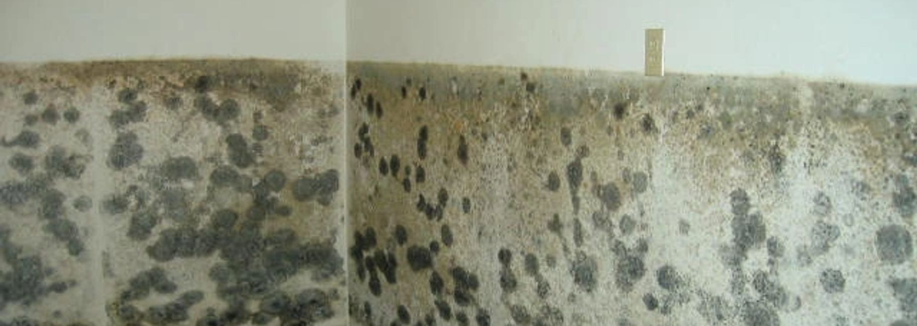 Mold in a house.