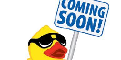 Al's Quackery - Ancona Ducks, Ducklings   Al's Quackery