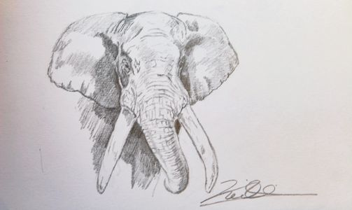 Keith McAllister, Oil Paintings, Wildlife Art, Wildlife artist, pencil sketch, African Elephant