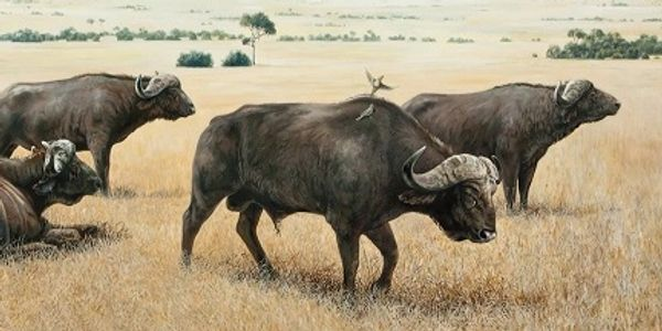Keith McAllister, Wildlife Art, Wildlife Artist, Cape Buffalo, Kenya