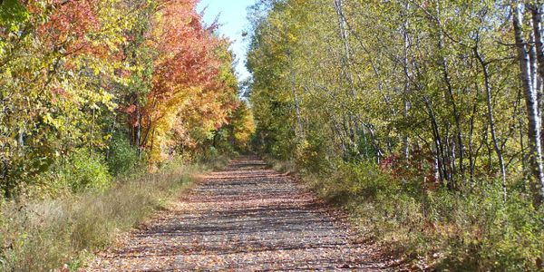 The Tuscobia Trail in fall.