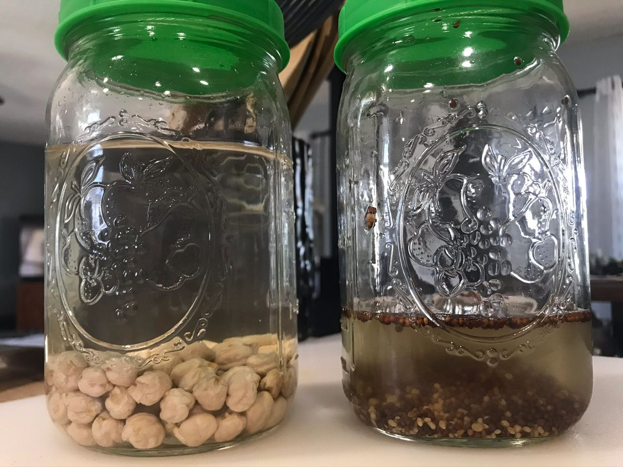 Sprouting seeds vs raw Beans