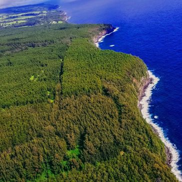 Acres and acres of oceanfront land