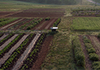 Gentle Harmony Farms hosts eleven 2,500 square foot plots of organic medicinal herbs
