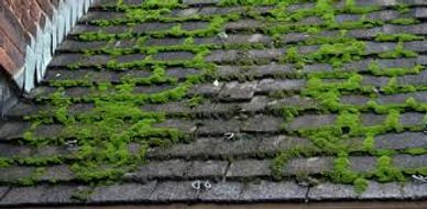 Island Imperial Roofing Moss on Roof