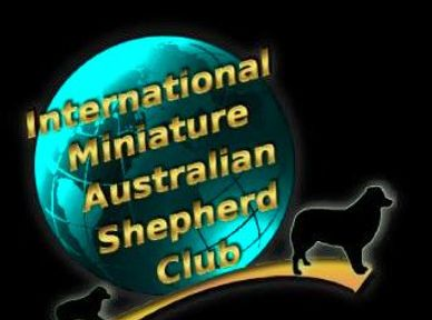 The International Miniature Australian Shepherd Club was formed to protect the  Mini Aussie.