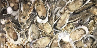 Oysters halfshell meat only frozen fresh nautilus seafood j Deluca squid distributor export import