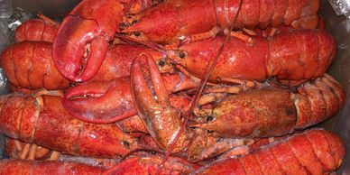 Seafood castle, PAFCO, h&t, Sunnyvale seafood corp, j Deluca fish co, nautilus seafood, lobster cull