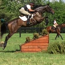 Equestrian Competition in 8 disciplines: Dressage, Eventing, Show Hunters, Show Jumpers, Equitation