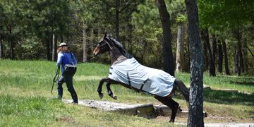OTTB Events Freestyle SETBS Southeastern Thoroughbred Showcase TB Retired racehorse