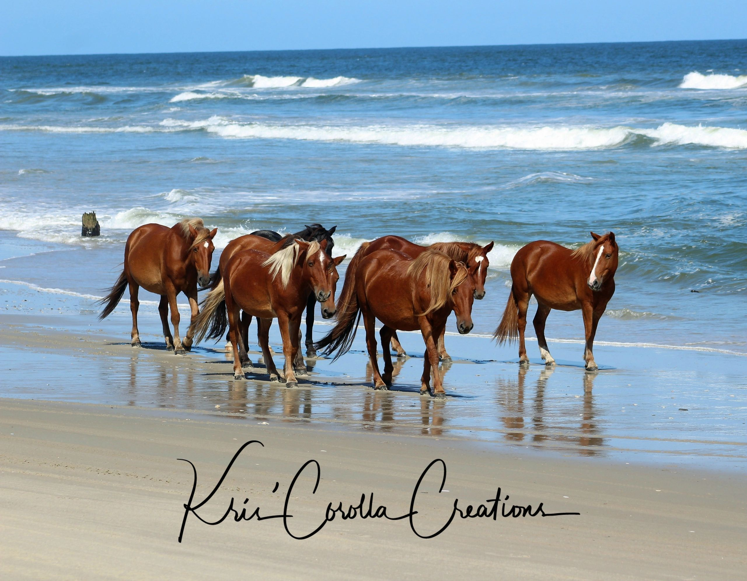 corolla wild horse canvases