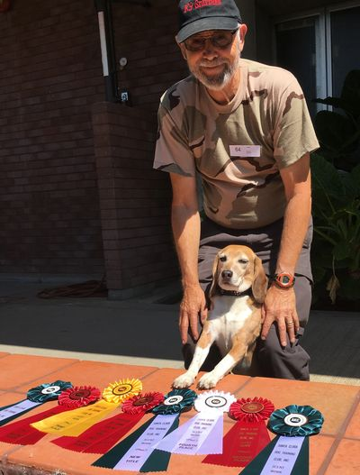 Buddy hauls in a tone of ribbons at AKC Scent Work Trial in San Jose, CA.