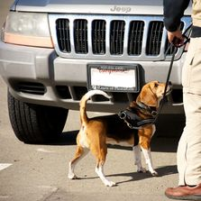 k9 Nose Work Vehicle Search at NACSW Trial