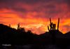 """Fall Color Sky""- The skey appears to on fire in the Phoenix Mountain Preserve."