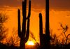 """Follow Me Down""- The sun disappears for the day, between two old Saguaro cacti, in the Sonoran desert."