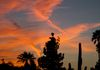 """Contrails At Sunset""- Contrails create stunning designs across the evening sky."