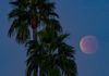 """The Blood Moon Eclipse"" - The Lunar eclipse of a blue, supermoon, as seen from Phoenix, Arizona."