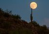 """Moon Balance"" - The full moon rises over a Saguaro cactus, at Cave Creek Regional Park."