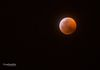 """Wolf Moon Eclipse"" - The Wolf Moon Eclipse, as seen from Phoenix, Arizona, USA."