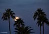 """Setting Wolf Moon"" - The Wolf Moon, sets behind a group of palm trees, on a cold winter morningm in the Valley of the Sun."