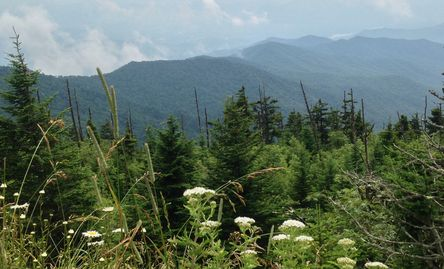 The beautiful, foothills of The Great Smoky Mountains - Home of Wild Weed Organic!