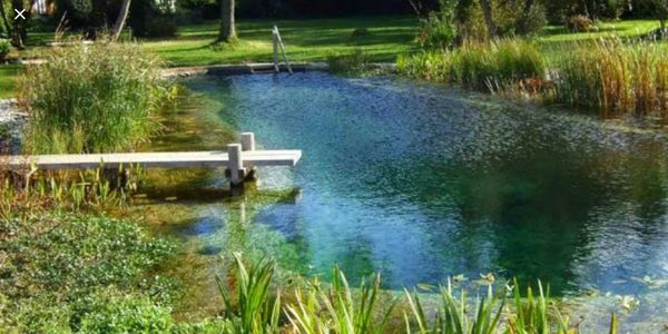 Natural swimming pond England style