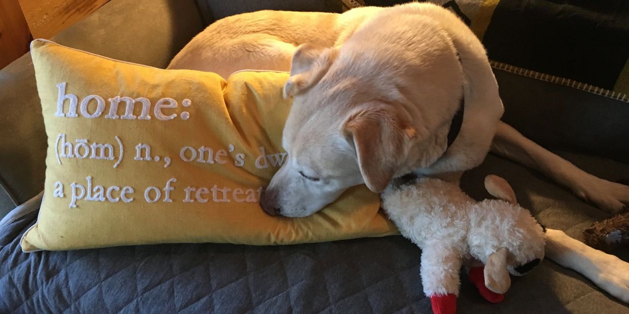 Maximus the Yellow Lab, was our constant companion for 12 years.  He understood Big Dreams!