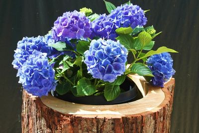 Hollow log Planter, Perfectly Hollowed to fit a standard 5 gallon bucket or Pot. The absolute best!