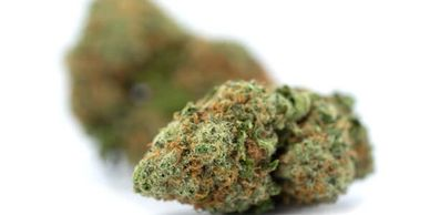 CanaKush - Cannabis Discount, Cannabis Seeds, Save, Coupon Code